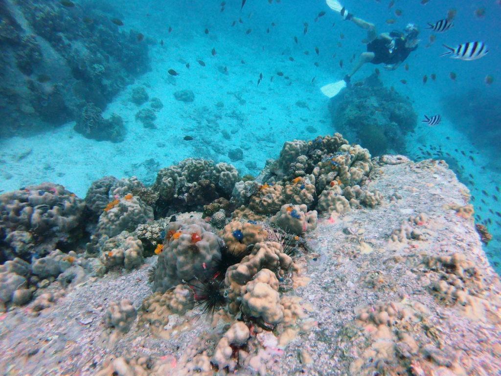 ปะการัง เกี่ยวกับ freediving