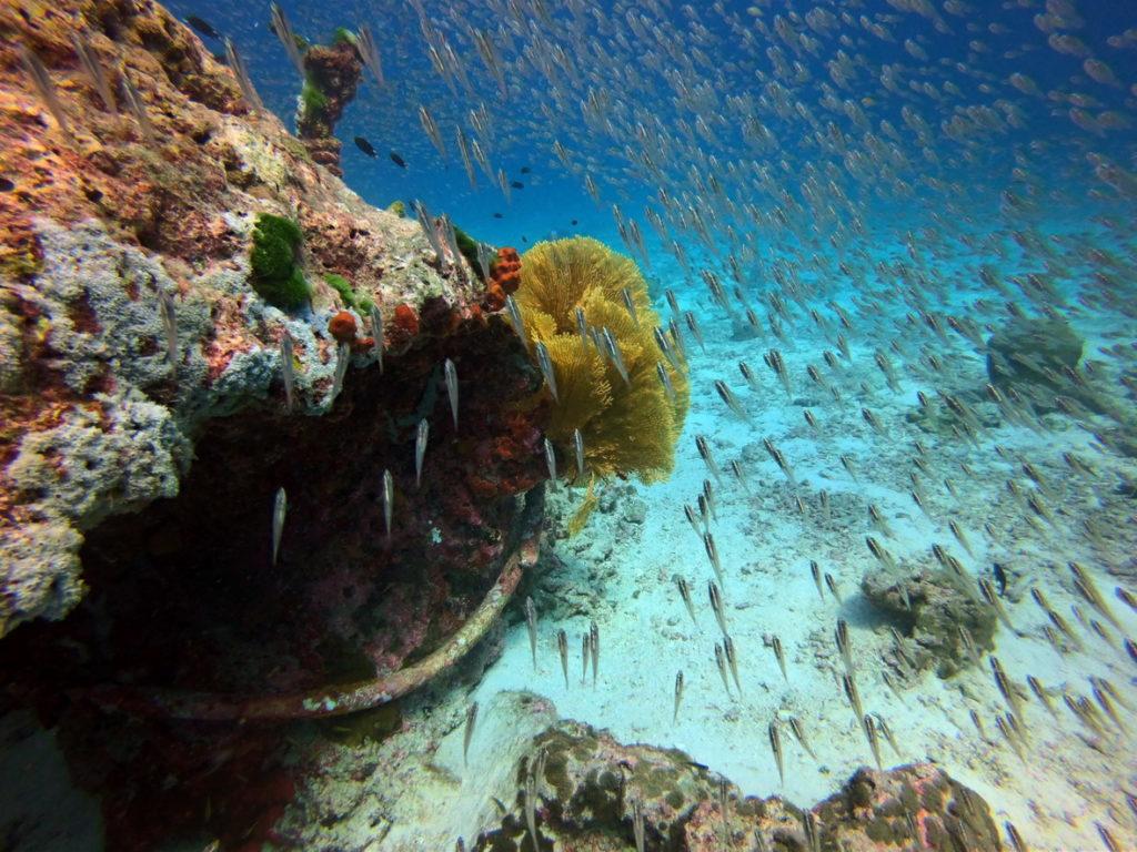 ปะการัง เกาะสุรินทร์