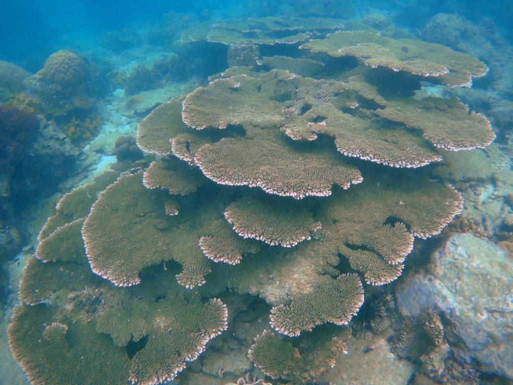 Freediving ช่องแสมสาร ทะเลใกล้กรุงเทพฯ