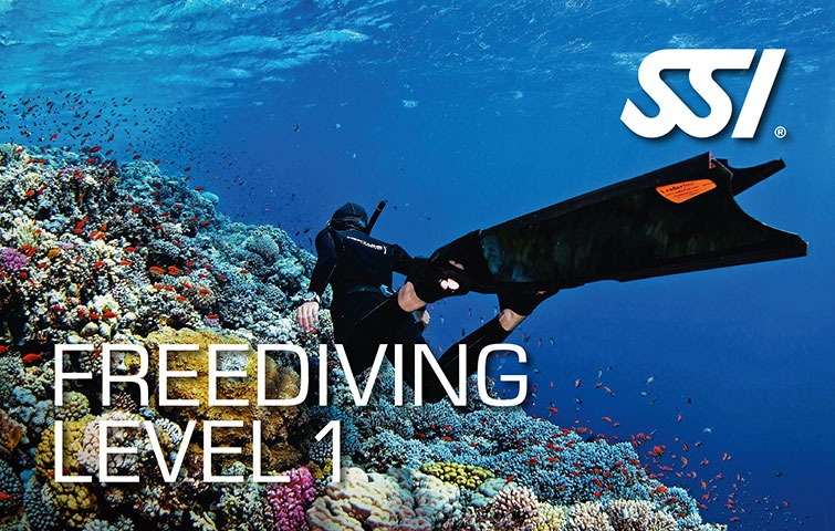 SSI-free-diving-level-1 picture